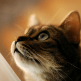 Un chat sauve ses maîtres d'un dévastateur glissement de terrain