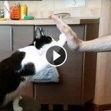 Ce chat connaît l'ordre « tape m'en cinq » et le maîtrise à la perfection ! (Vidéo du jour)