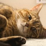 Le chat, l'hospitalisation et la convalescence : comment le préparer et le rassurer ?