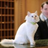 A Paris, l'hôtel Bristol engage un chat