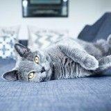 10 idées pour aménager un coin déco pour votre chat