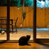Son chat le réveille en pleine nuit : il comprend soudain qu'il n'a plus le temps de réfléchir