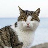 L'île d'Oléron, dépassée par sa population de chats ?