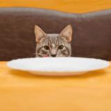 Alsace : ce chat avait tellement faim qu'il a mis le feu à la maison de ses propriétaires !
