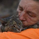 Un chat survit miraculeusement à l'incendie Rocky Fire...