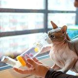 Mon chat a de l'asthme : que faire ?