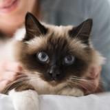 Mon chat est-il jaloux ?