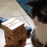Ce chat joue au Jenga comme un vrai pro et c'est impressionnant (Vidéo du jour)