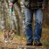 Dans cette commune française, un arrêté municipal appelle les propriétaires à tenir les chats en laisse