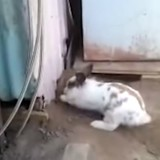 Ce lapin a fait l'impensable pour sauver un chat (Vidéo)