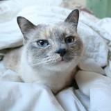 Dormir avec son chat, est-ce vraiment une bonne idée ?
