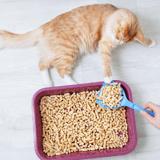 Comment choisir la meilleure litière pour mon chat ?