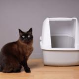 Quelles sont les meilleurs accessoires pour litière en 2021 ?