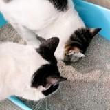 Une vengeance inoubliable : ces chats ont fait une découverte très originale dans leur bac à litière !