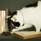 La chatte Molly, un véritable rat de bibliothèque