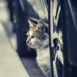 États-Unis : une loi punit les automobilistes qui renversent un chien, mais pas un chat !