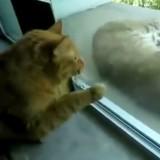 Ce chat supplie son maître de laisser entrer un chat errant, mais il réalise vite que ce n'est pas du tout un chat