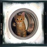 Un chaton survit après un passage dans la machine à laver