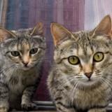 Un homme se fait expulser de son domicile en Espagne avec ses 110 chats !