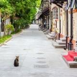Ce chat est si populaire qu'il a 10 propriétaires !