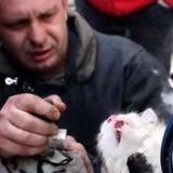 Victime d'un incendie, ce chat était presque mort, mais le miracle s'est produit (Vidéo)