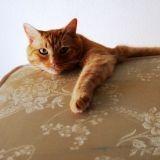 Un chat retrouvé dans un matelas d'occasion