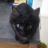Les chroniques de Maître Terrin : Mickey, le chat empoisonné et jeté dans une poubelle