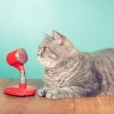 Vous voulez comprendre ce que vous dit votre chat ? Il y a un gadget pour ça