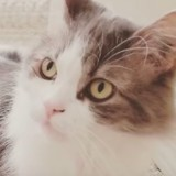 Secouru, ce chat a une réaction incroyable quand il découvre le cadeau que lui a fait sa maman (Vidéo)