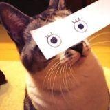 La nouvelle lubie des propriétaires de chats japonais !