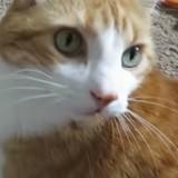 Ce chat aide sa maîtresse à faire ses mots croisés (Vidéo du jour)