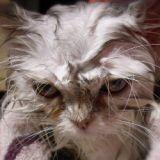 Trois mois de prison pour avoir tué son chat dans une machine à laver