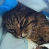 Il appelle un taxi pour emmener son chat mourant chez le vétérinaire : la réponse est d'une cruauté rare