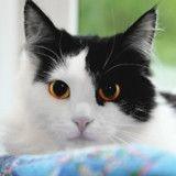Piqûres de moustiques : quels sont les dangers pour mon chat et comment le protéger ?