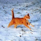 Mon chat peut-il attraper froid l'hiver ?