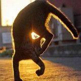 10 incroyables photos de chats qui se prennent pour des ninjas