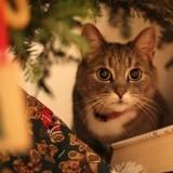 Evitez les dangers de Noël pour votre chat ou votre chien !