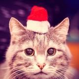 Noël 2018 : 5 idées de cadeaux canons pour gâter votre chat !
