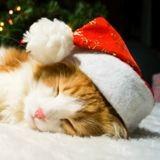 Noël 2017 :  5 jolies idées de cadeaux pour faire plaisir à son chat