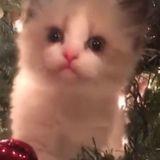 Ce chat est la plus adorable des décorations de Noël (Vidéo du jour)