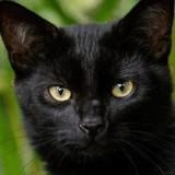 Chat placé au refuge suite à la mort de son maître : sa puce révèle un secret choquant
