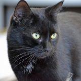 Touchant : un homme et son chat réunis après 11 ans