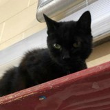 Ils veulent euthanasier leur chatte, le refuge découvre qu'elle a un don incroyable (Vidéo)