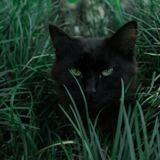 Ils allaient marquer le point décisif du match : ce chat noir a tout fait basculer ! (Vidéo)
