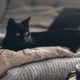 Sa soeur lui annonce qu'elle est enceinte et fait une demande hallucinante au sujet de ses chats