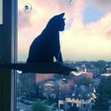 Il quitte la maison pour faire ses études, son chat a une réaction bouleversante (Vidéo)