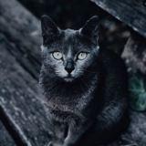 Opération Perle Noire : les chiens et chats noirs sortent de l'ombre en cette période de Black Friday