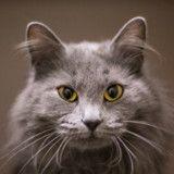 Elle croit que son chat a été volé, quand elle apprend la vérité elle est soulagée