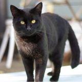 Adopteriez-vous un chat noir ? (La question Wamiz/RMC)