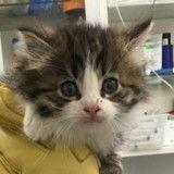 Ce chaton qui attend une nouvelle famille a une habitude absolument craquante